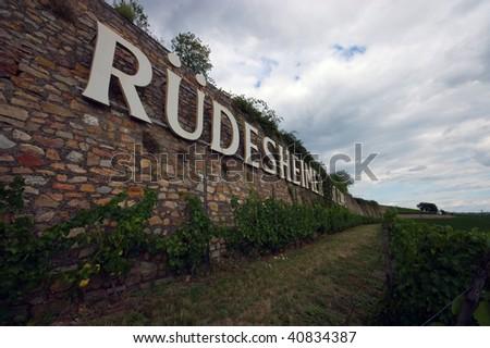Vine yard, Germany - stock photo