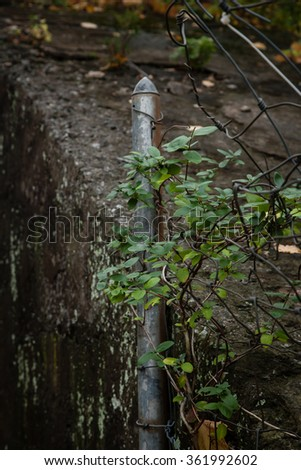Vines grow over an old metal fence post - stock photo