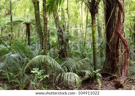 Vines grow up large tree in jungle - stock photo