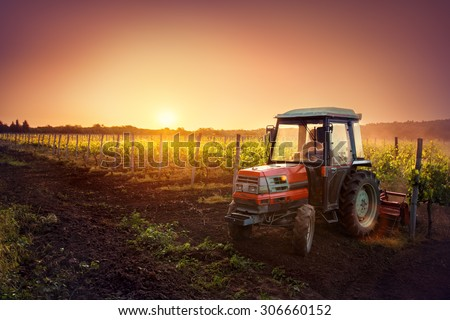 Vines on the field and a red tractor at sunset  - stock photo