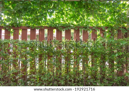 Vines wrapped around a fence Make concealed from the outside.