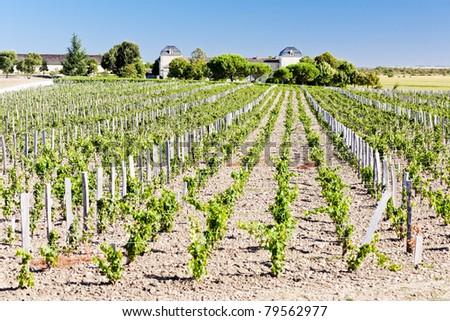 vineyard and Chateau Calon-Segur, Saint-Estephe, Bordeaux Region, France - stock photo
