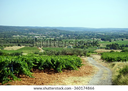 Vineyard and dirt road in south France                                - stock photo