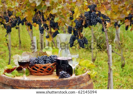 vineyard and red wine