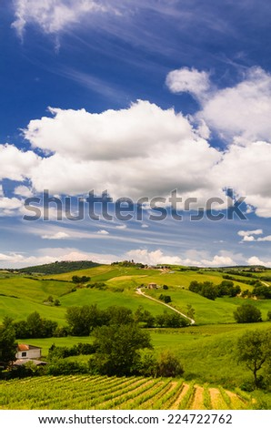 vineyard and Tuscany landscape, Toscana, Italy - stock photo