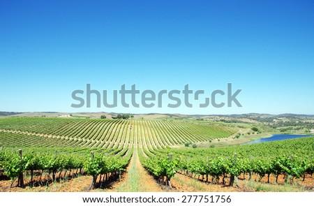 Vineyard at Alentejo region, Portugal. - stock photo