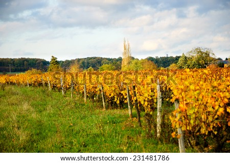Vineyard at sunset. Autumn in Loire Valley (Val de Loire, France)  Selective focus at the vine rows in the middle.  - stock photo