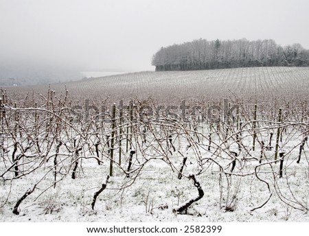 Vineyard covered with snow, England - stock photo