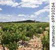 Vineyard from Chateauneuf-du-Pape Provence - stock photo