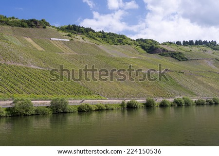 Vineyard Germany