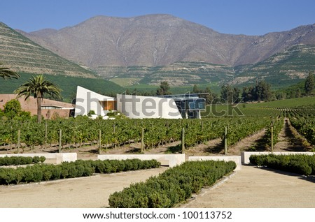 Vineyard in Aconcagua Valley Chile - stock photo