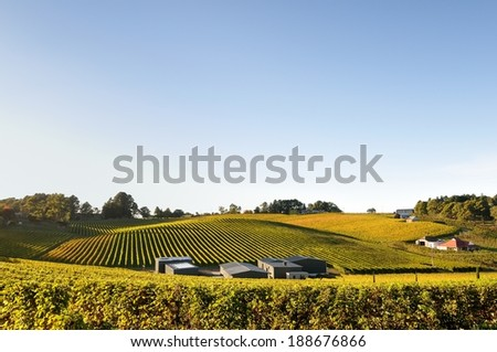 Vineyard in Adelaide Hills autumn - stock photo