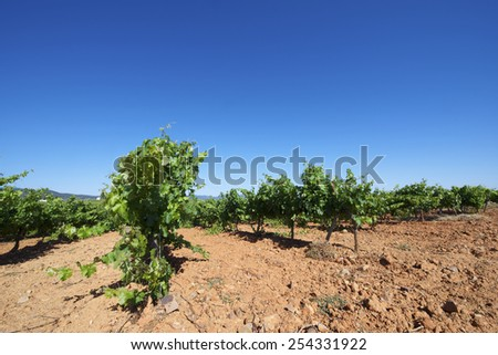 Vineyard in Aragon, Spain - stock photo