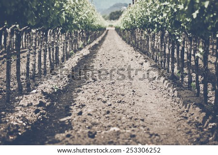 Vineyard in Autumn with Vintage Film Style Filter, soft focus - stock photo