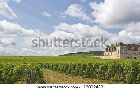 Vineyard in Bourgogne, Burgundy. France. - stock photo