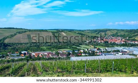 Vineyard in German countryside - stock photo