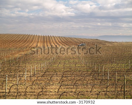 Vineyard in La Rioja, Spain - stock photo