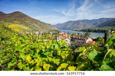 Vineyard in Lower Austria - stock photo