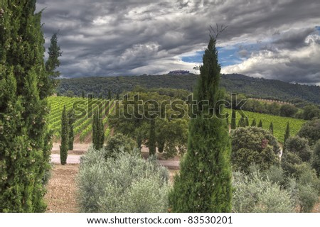 Vineyard in Montalcino, Tuscany with a dramatic evening sky - stock photo