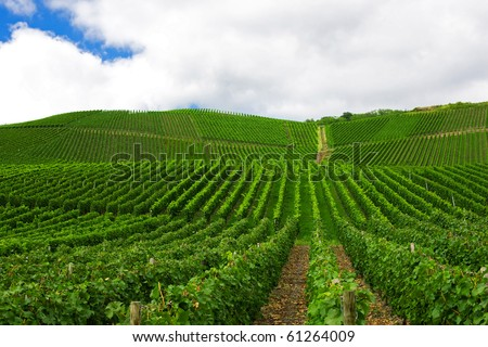 Vineyard in Pfalz, Germany - stock photo