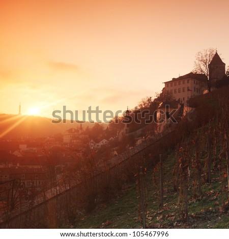 vineyard in prague - stock photo