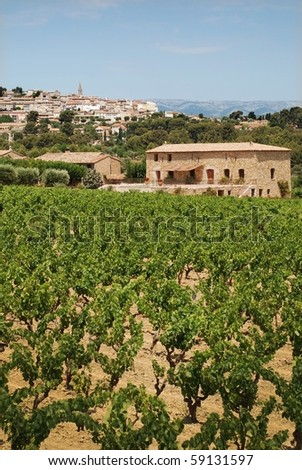 vineyard in Provence, France with  village on back - stock photo