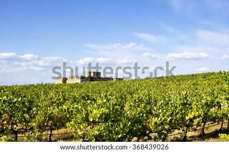 vineyard in south of Portugal, Alentejo region - stock photo