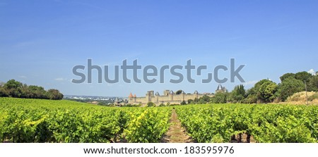 Vineyard in Southern France. Carcassonne. France.