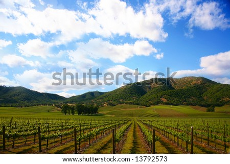Vineyard in Spring with a Bright Sunny Sky - stock photo