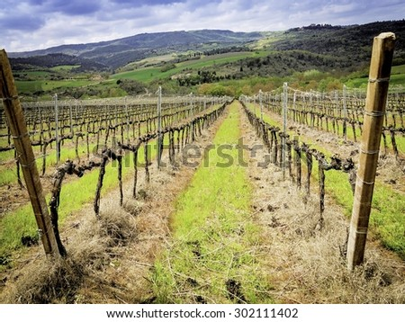 Vineyard in spring with diminishing point of view - stock photo