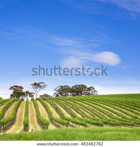 Vineyard in the Clare Valley, South Australia.