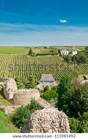 Vineyard in the famous wine making region - Loire Valley, France - stock photo