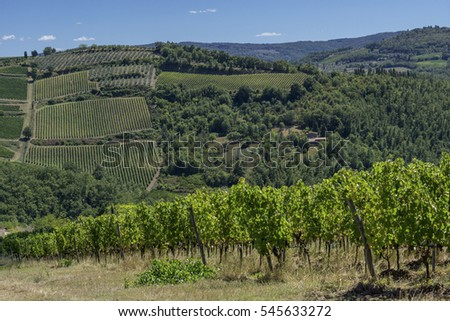 Vineyard in Tuscan countryside