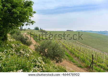 Vineyard in urban of Florence , Italy