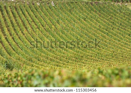 Vineyard in vosne romanee, burgundy, france during autumn or harvest season - stock photo
