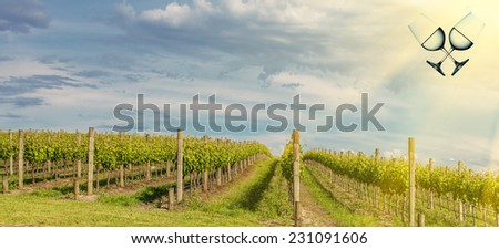 Vineyard in Yarra Valley, Australia. - stock photo