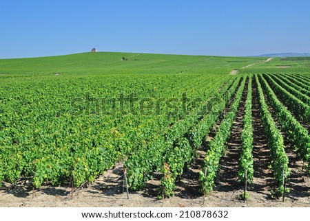 Vineyard Landscape in Champagne region near Epernay,France