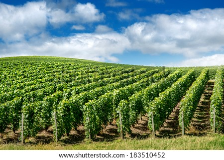 Vineyard landscape, Montagne de Reims, France - stock photo