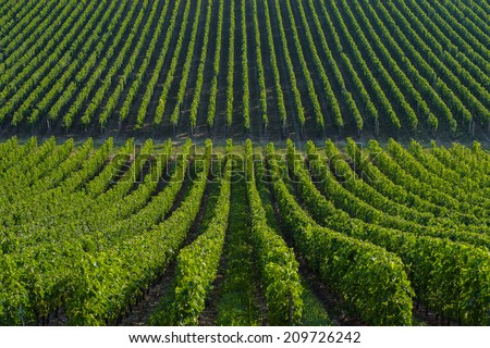 Vineyard landscape-Vineyard south west of France, Bordeaux Vineyard - stock photo