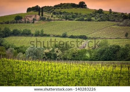 Vineyard near Montalcino, Tuscany, Italy - stock photo