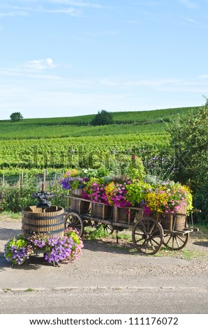 Vineyard of Riquewihr in Alsace, France - stock photo