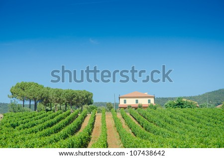 Vineyard on a bright summer day - stock photo