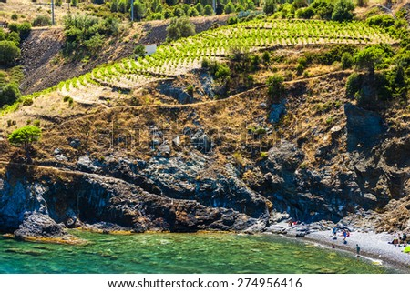 vineyard on Cap de Peyrefite near Cerbere, Languedoc-Roussillon, France - stock photo