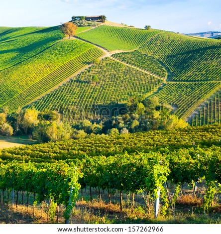 Vineyard on hills - stock photo