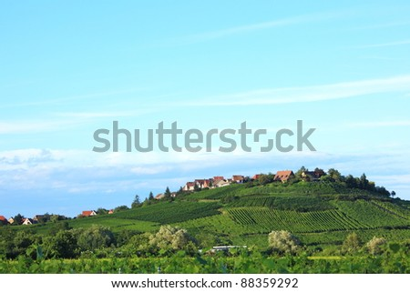 vineyard on the hill at Alsace, France - stock photo