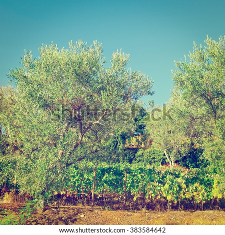Vineyard on the Hills of Portugal, Instagram Effect - stock photo