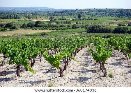 Vineyard on the slope of valley in south France                                - stock photo