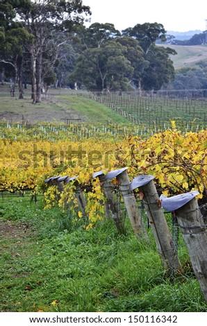 Vineyard post ends in McLaren Vale, South Australia - stock photo