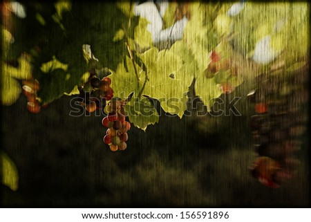 Vineyard postcard - stock photo