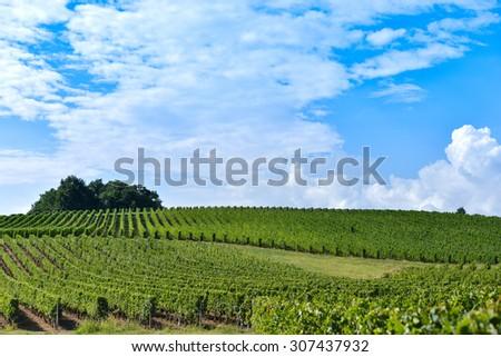 Vineyard Sunrise - Bordeaux Vineyard-France, Aquitaine, Gironde, 33, - stock photo